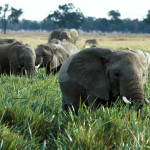 Wildlife_Elephants-file
